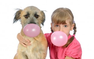 A dog and its owner chew gum together. In the quest for a good sugar substitute, xylitol is one of the leading candidates. Unfortunately, xylitol, while safe for humans, can be deadly to dogs and other pets.